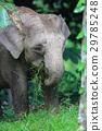 大象 野生動物 野生生物 29785248