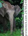 elephant, wild, animal 29785249