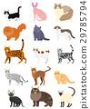 แมว,สัตว์,ภาพวาดมือ สัตว์ 29785794
