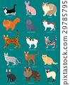 ชื่อประเภทชุดแมว 29785795