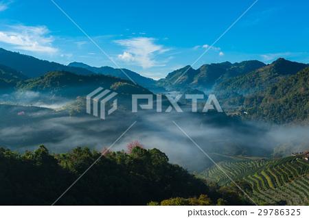 Beautiful Sunrise and mist at tea plantation field 29786325