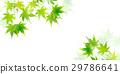 槭樹離開夏天背景 29786641