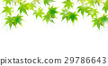 槭樹離開夏天背景 29786643