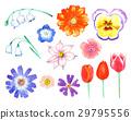 花朵 花卉 花 29795556