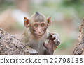 ลิงน่ารัก 29798138
