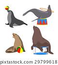 circus seals. Vector illustration. Set. Cartoon 29799618