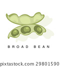 Broad Bean Pod, Infographic Illustration With 29801590