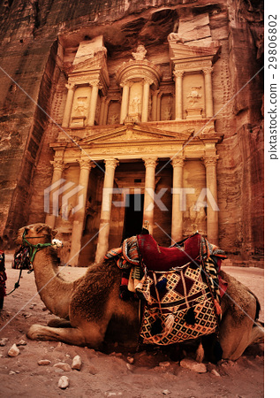 Bedouin camel rests near the treasury 29806802