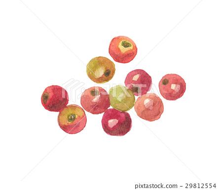 캠의 열매 29812554