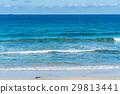 해변, 파도, 바다 29813441