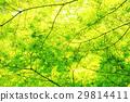 tender, green, verdure 29814411