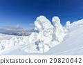 摻鋁氧化鋅 覆有霜的樹 冰霜覆蓋的樹木 29820642
