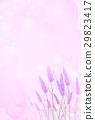 熏衣草 花朵 花 29823417