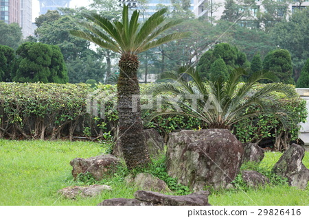 Background material of small tree grass 29826416