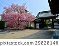 kyoto, ancient city, ancient capital 29828146
