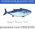 สีน้ำ,ปลา,เวกเตอร์ 29828285