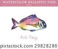 สีน้ำ,ปลา,เวกเตอร์ 29828286