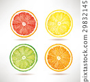lime, lemon, orange, grapefruit slices 29832145