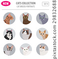 Cat breeds icon set flat style isolated on white 29832688
