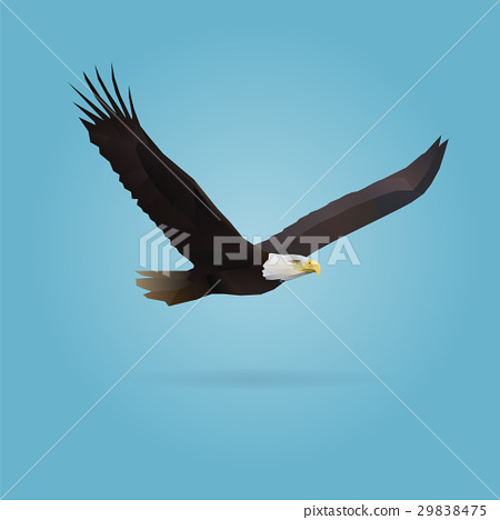 eagle 29838475