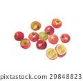 캠의 열매 29848823