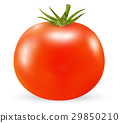 real 3d tomato on a white background 29850210