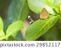 ผีเสื้อ,แมง,ผักใบ 29852117