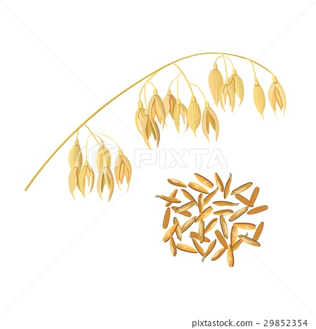 Oat ears of grain and bran. Golden spike and corn 29852354