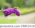 世界公民 花朵 花 29852419