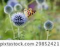 世界公民 蝴蝶 淺紫色的花 29852421