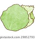 상추 29852793