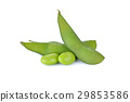 boiled Japanese green soybeans (Edamame) on white 29853586