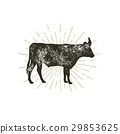 Vintage hand drawn cow icon. Farm animal 29853625