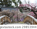 Plum tree 29853944