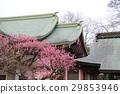 Plum blossom 29853946