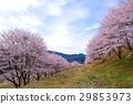 가로수, 꽃, 수목 29853973