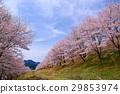 가로수, 꽃, 수목 29853974