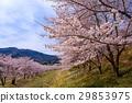 가로수, 꽃, 수목 29853975