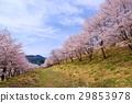 가로수, 꽃, 수목 29853978