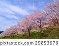 가로수, 꽃, 수목 29853979
