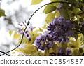 Purple 29854587