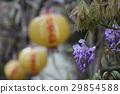 Purple 29854588