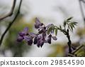 Purple 29854590