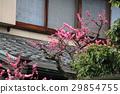 Plum blossom 29854755