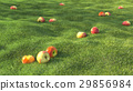 realistic green grass field summer with apple 29856984
