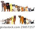dog, dogs, cat 29857257