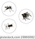 bug, fly, insect 29860082