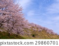 가로수, 꽃, 수목 29860701