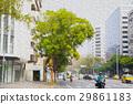 거리, 햇빛, 푸른 나무, 스트리트, 태양, 목, 거리, 맑은, 푸른 나무 29861183