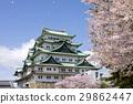 ปราสาทนาโงย่า,ดอกซากุระบาน,ซากุระบาน 29862447